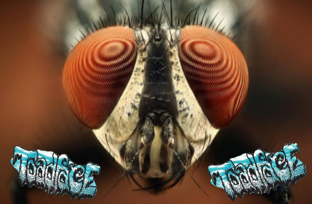 When Toadface met the FLY [NEW Insane Collaboration]